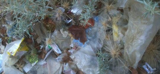 Plastic Choking Beaches