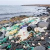 Rising plastic menace choking sealife