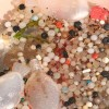 Port Phillip Bay Polluted with Microplastics – Australia
