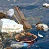 Plastic waste in marine ecosystems cost US$13bn in damages