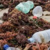 More than 25,000kg of plastic littered in NZ daily – New Zealand