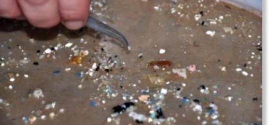Microplastics in the ocean are moving up the food chain