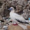 Plastic in 99 percent of seabirds by 2050 – Australia
