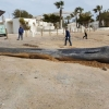 Whale dies after swallowing nearly 30kg of rubbish