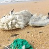 Campaign to halt mass balloon releases to protect wildlife – UK