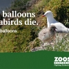 Ourdoor Balloon Relese Banned in Victoria – Australia