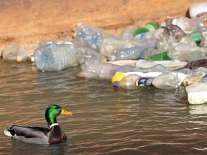 duck-plastic-bottle