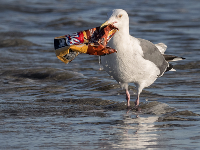 Seagull-Plastic-CBag_Main