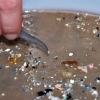 The North Atlantic Garbage Patch: A Plastic Soup of Pollutants Ladled from Consumption | Frank Gromling | FlaglerLive – Your News Service for Flagler County News Palm Coast News Bunnell Flagler Beach Beverly Beach and Marineland