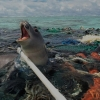 These 27 Powerful Photos Will Make You Swear Off Plastic Forever
