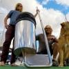 Australian surfers' Seabin invention sparks global interest
