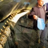 Plastic waste found inside washed up whales – Germany