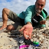 Microbeads are leaching toxic chemicals into fish, sparking public health fears