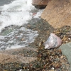 Petition asks for ban on balloon releases on Aquidneck Island -USA