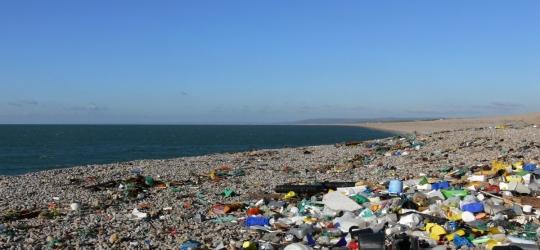 The Last Straw   Litter Free Coast and Sea – Dorset & East Devon – UK