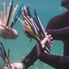 The problem with an outright ban on plastic straws