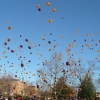 Environmental Calls Made to End the Releasing of Balloons in Brighton – UK