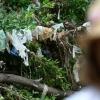 RIP plastic bag ban; now on to Plan B – Texas
