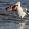 MCS joins 150 organisations backing call to ban oxo-degradable plastic packaging | Marine Conservation Society
