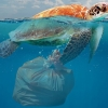Ban on mixed plastic waste exports comes into effect today – Australia